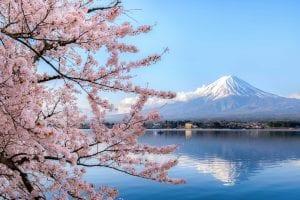 Giappone Hanami