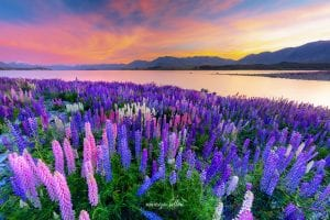 Nuova Zelanda (Fotografico)